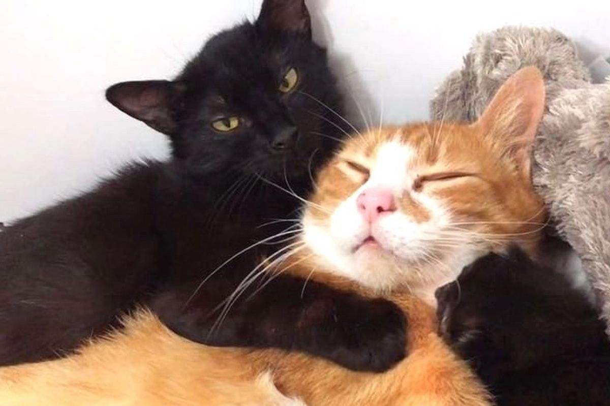 Rescued Cat Moms Comfort Each Other with Hugs and Raise Their Kittens Together