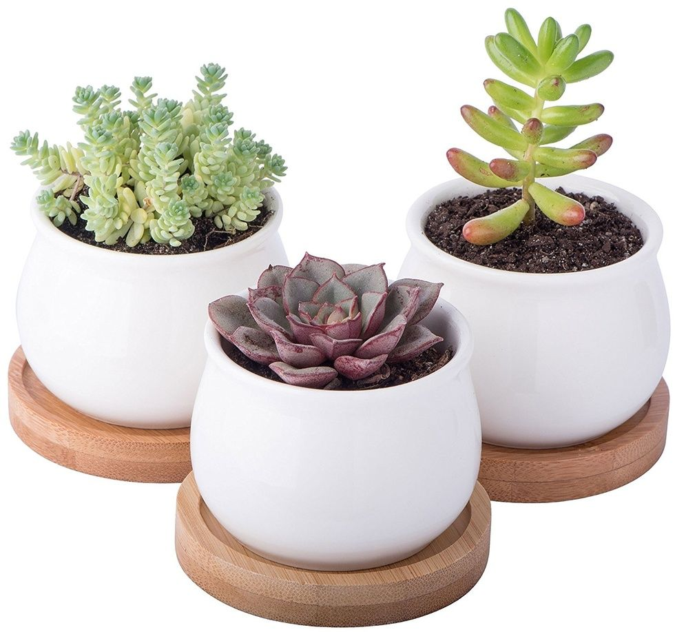 gifts for mothers day succulent set