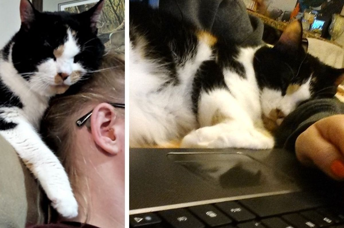 18-year-old Cat Has Been Girl's Loyal Friend, Study Buddy Since She Found Her as Kitten
