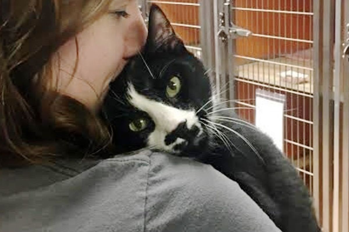 Shelter Cat Gives Everyone Hugs and Won't Take No for an Answer