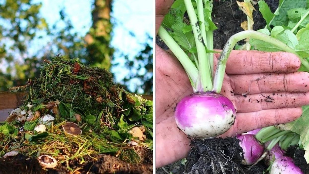 Table-to-Farm-to-Table: Startup Grows Food for Restaurants With Kitchen Leftovers