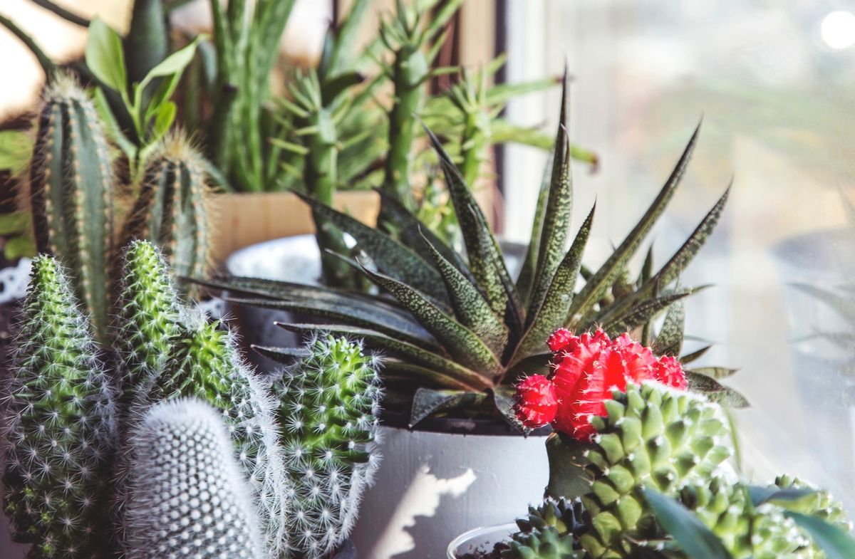 9 Little House Plants To Brighten Your Mood On A Rough Day