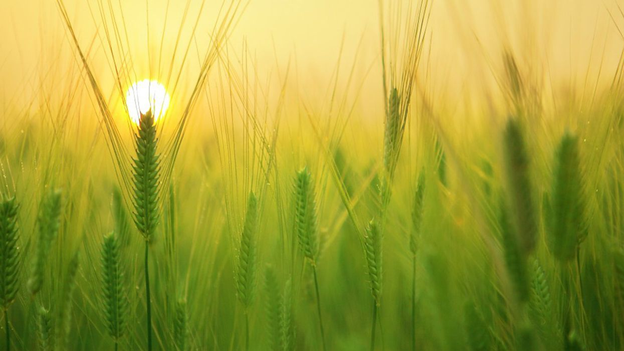 17 Organizations Feeding and Healing the World Through Regenerative Agriculture
