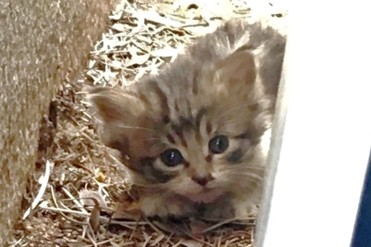Kitten Ran Around Parking Lot, Trying to Hide Until Woman Found Her and Turned Her Life Around