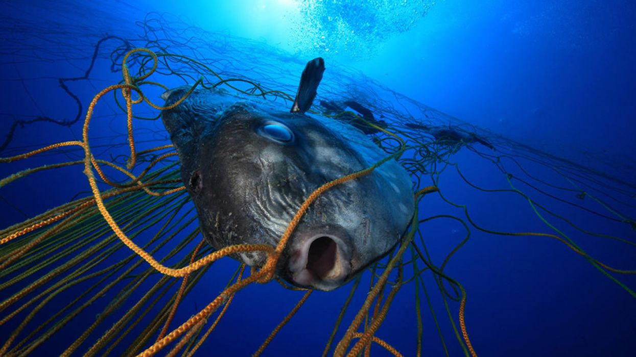A Single Discarded Fishing Net Can Keep Killing for Centuries