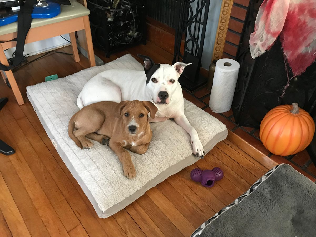 What My Two Dogs Taught Me