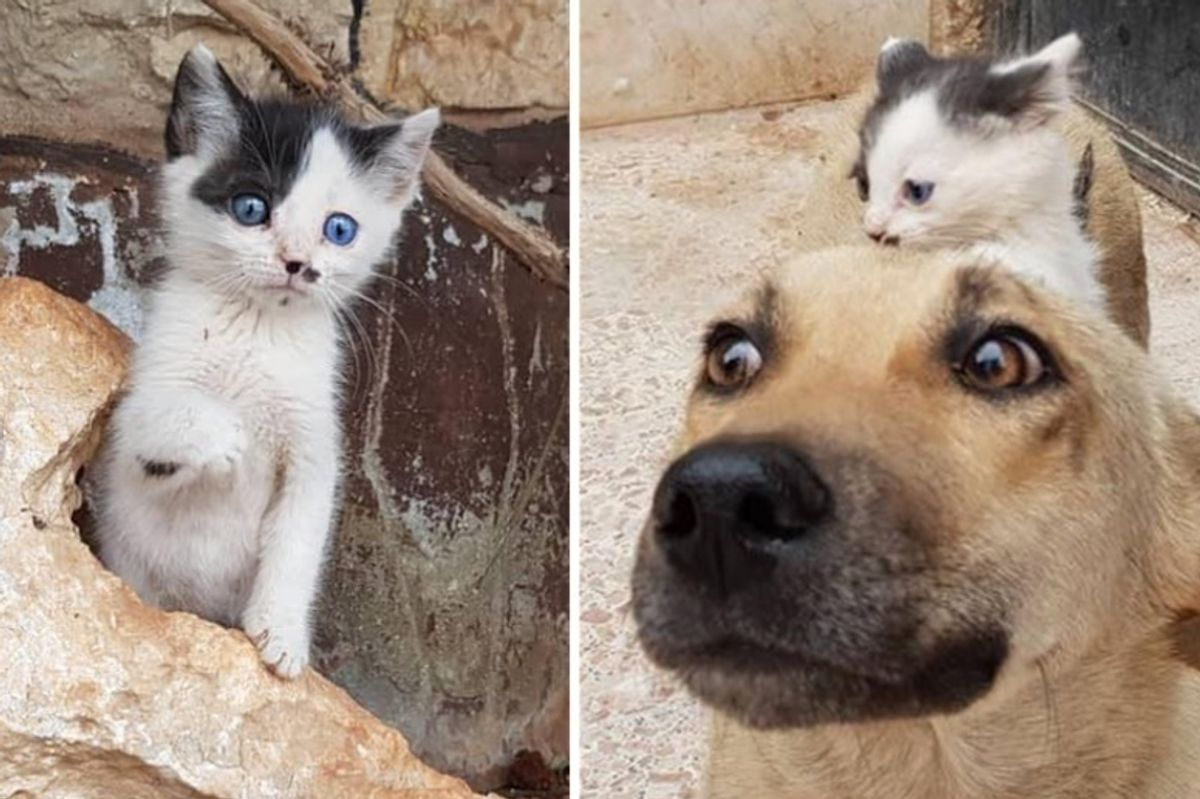 Orphan Kitten Walks Up to Dog Who Lost Her Pups, and Becomes Her Kitten