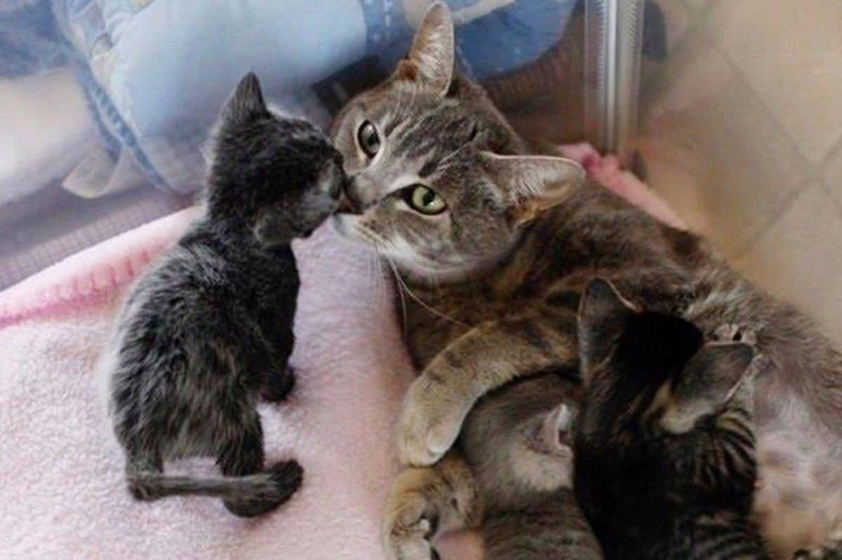 Paralyzed Stray Cat Survived Against All Odds So Her Kittens Could Live
