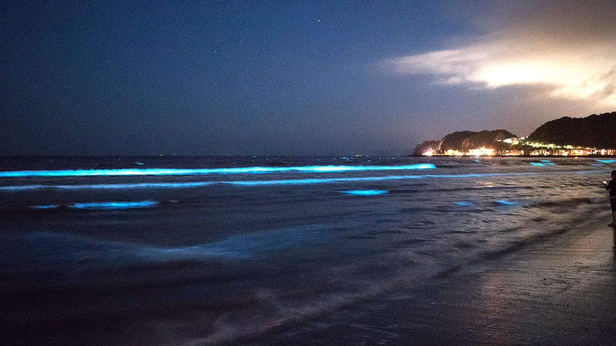 Mumbai's Glowing Waves a Sign of Climate Change