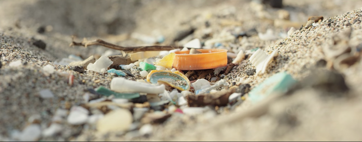 Plastic Harms Our Environment, And It's Time To Do Something About It