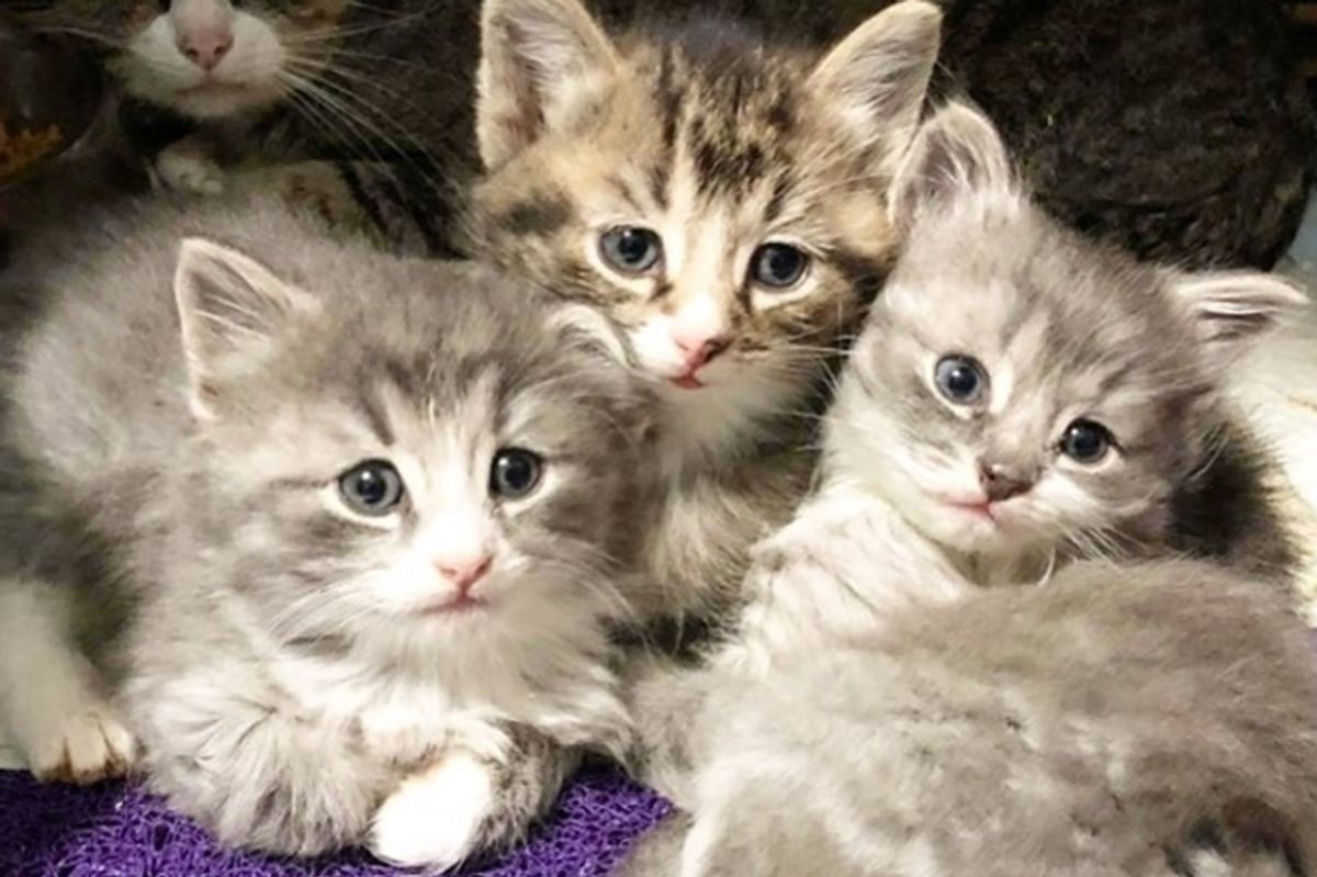 Woman Went to Adopt 2 Kittens But Couldn't Get Their Special Needs Brother Out of Her Mind