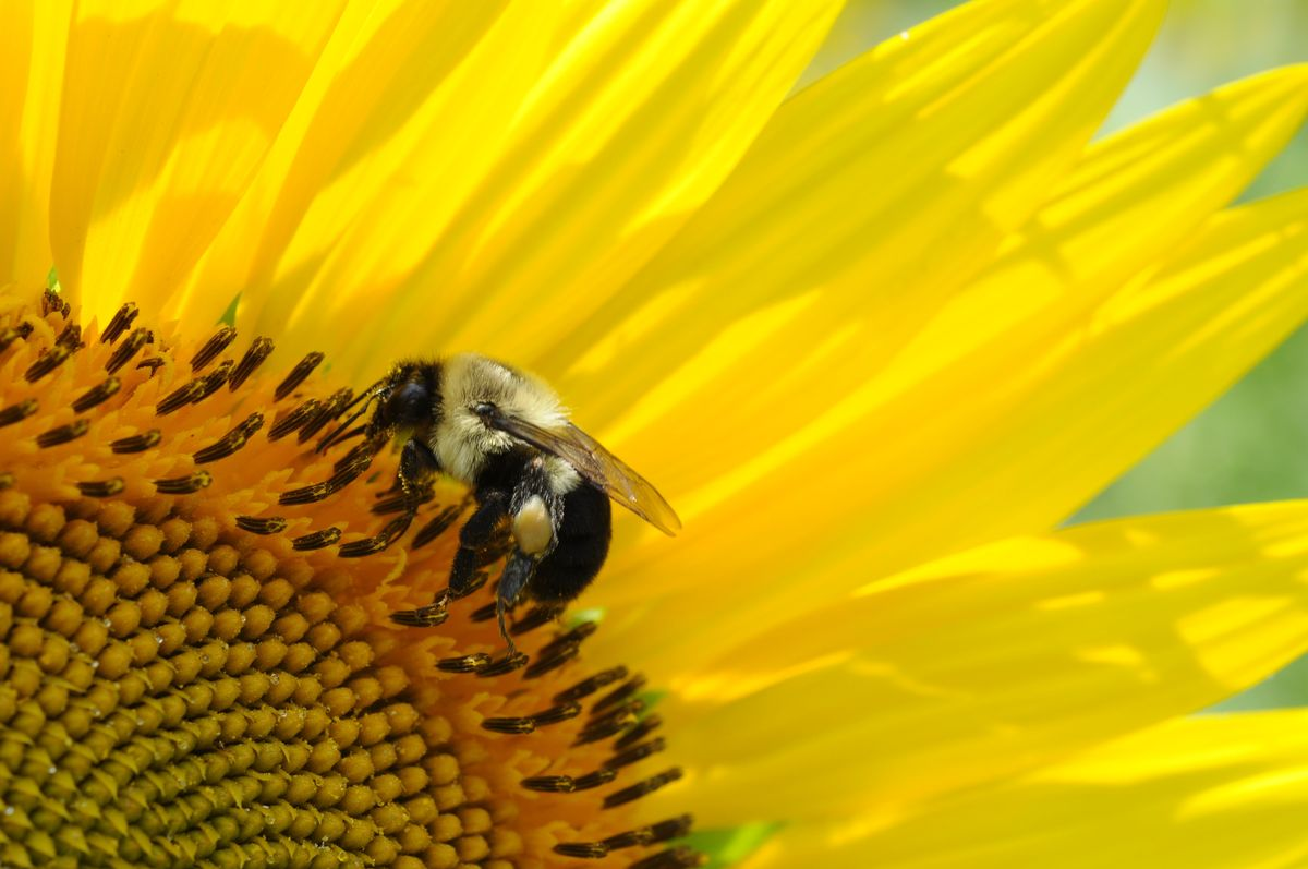 Yes, Even You Can Help To Save The Bees