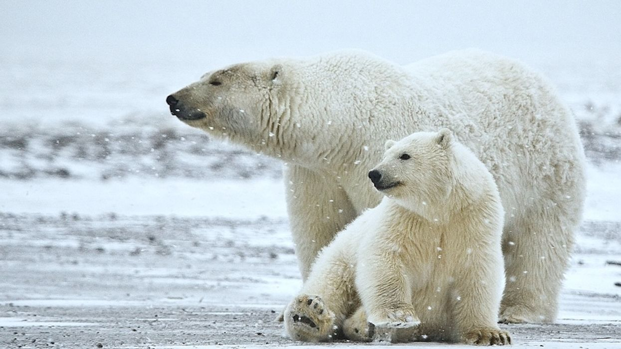 Feds Receive First Application to Explore ANWR for Oil