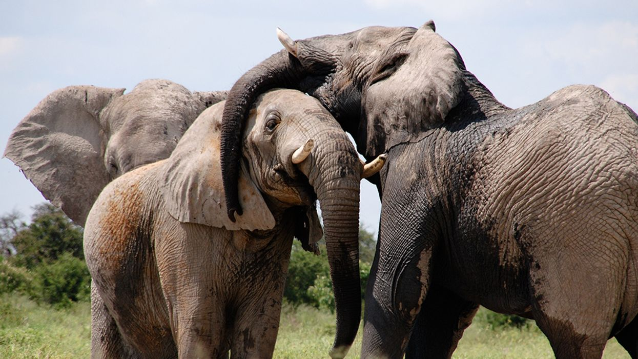 Can We Protect Elephants by Eavesdropping on Their Underground Messages?
