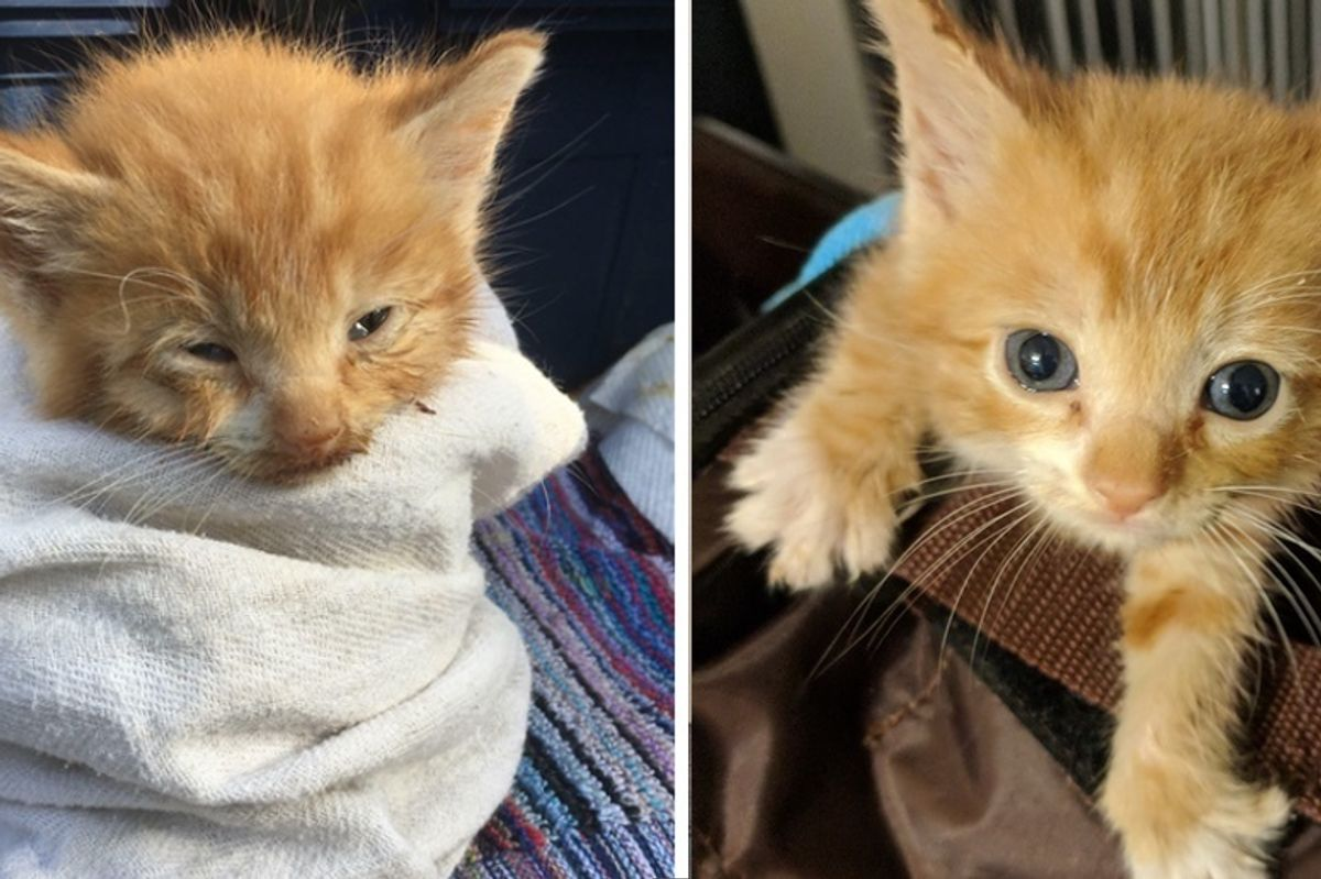 Kitten Who Lived on a Roof, Finds Love and Can't Stop Purring
