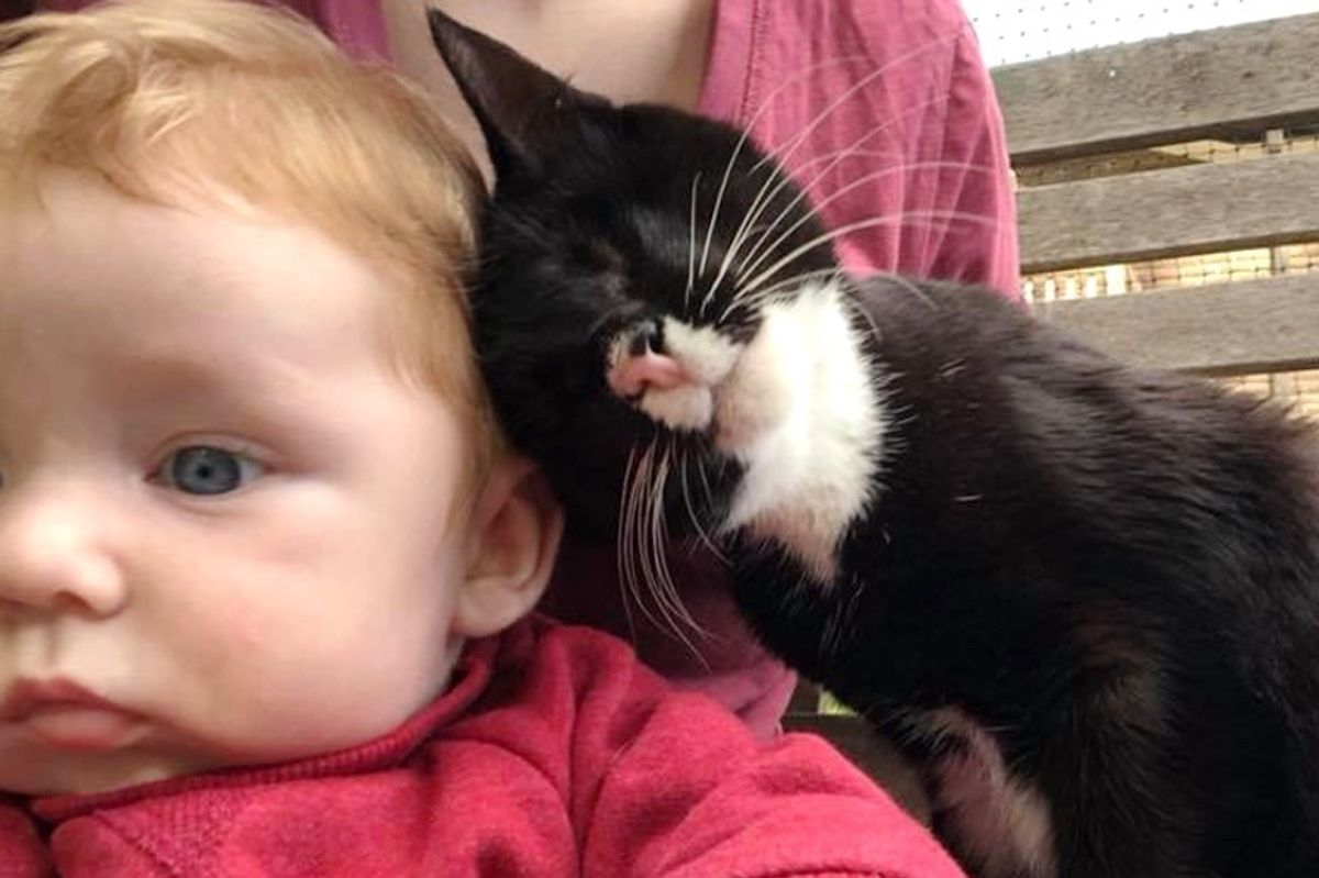 Blind Kitten Found Alone on Streets Can't Stop Giving Love and Cuddles for Saving Her Life