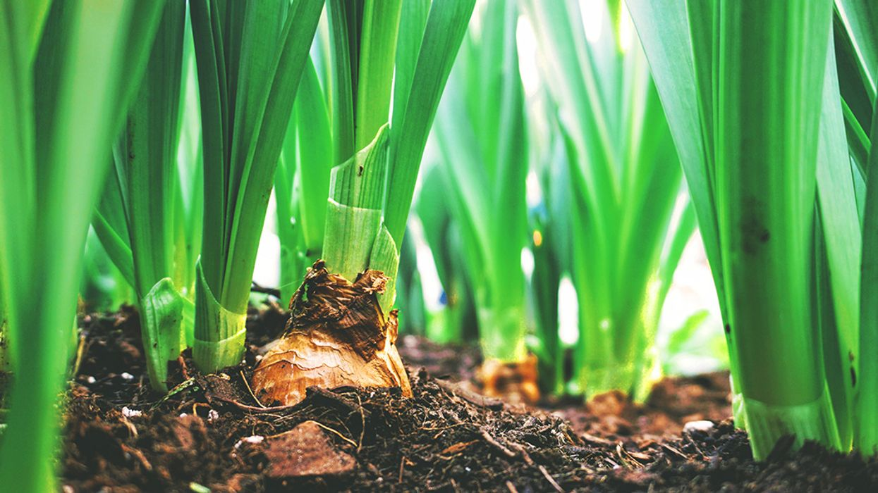 10 Smart Ways to Garden on the Cheap