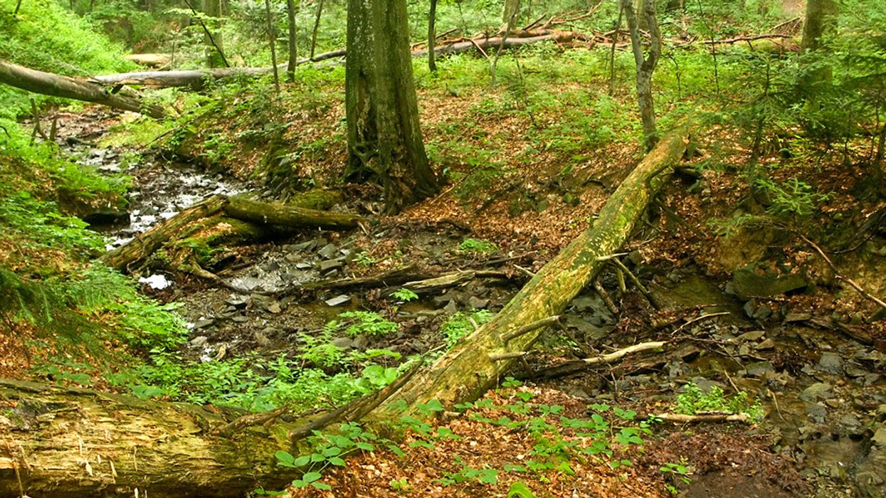 Two Studies Reveal Amazing Resilience of Older Forests