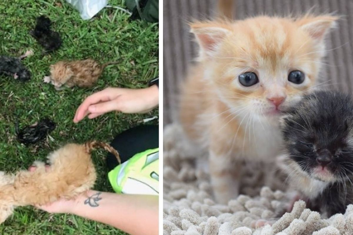 Kittens Cling to Each Other for Comfort After They were Rescued From House Fire