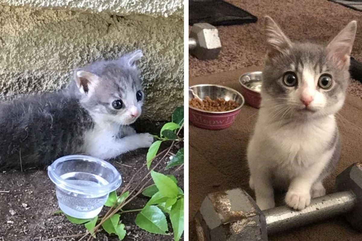 Woman Saved Kitten from Driveway But Didn't Know Her Life Would Be Changed Forever too