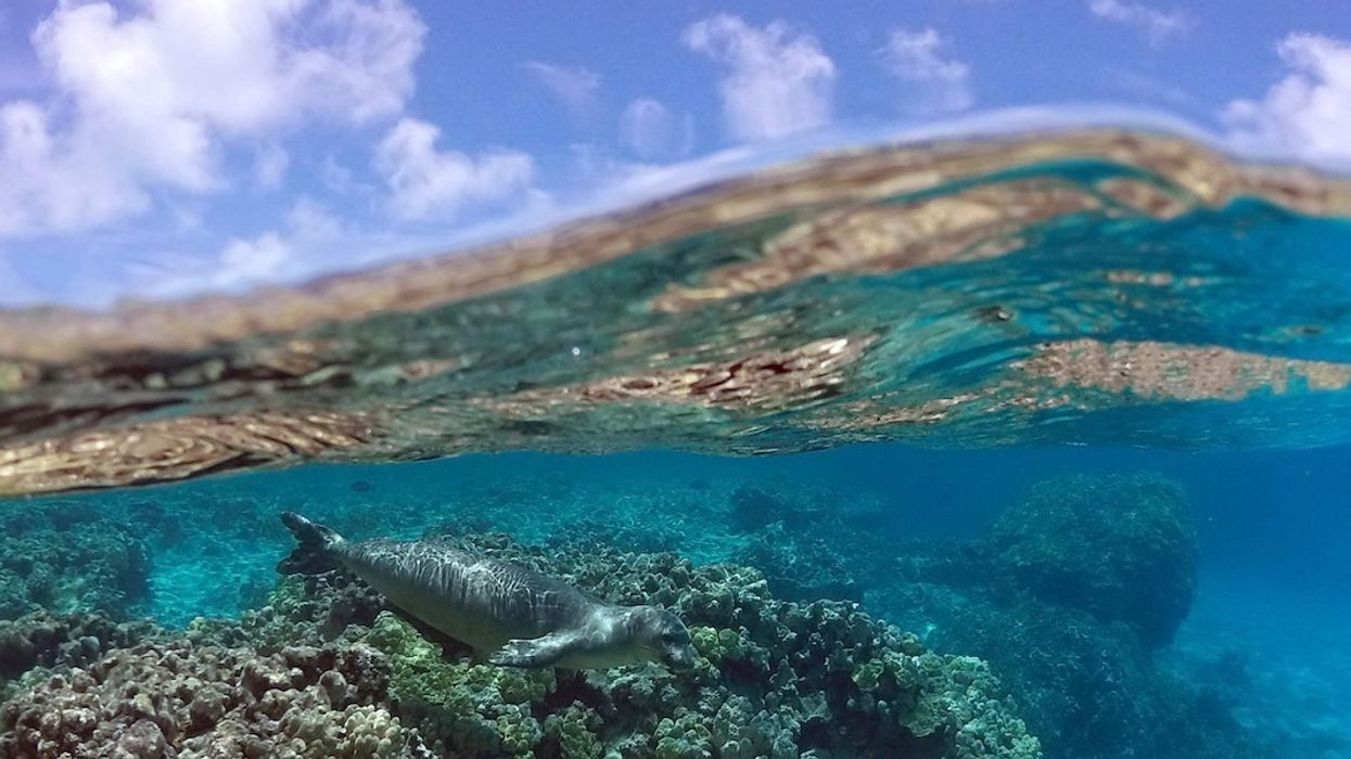 World Oceans Day: Saving Our Seas Starts With You