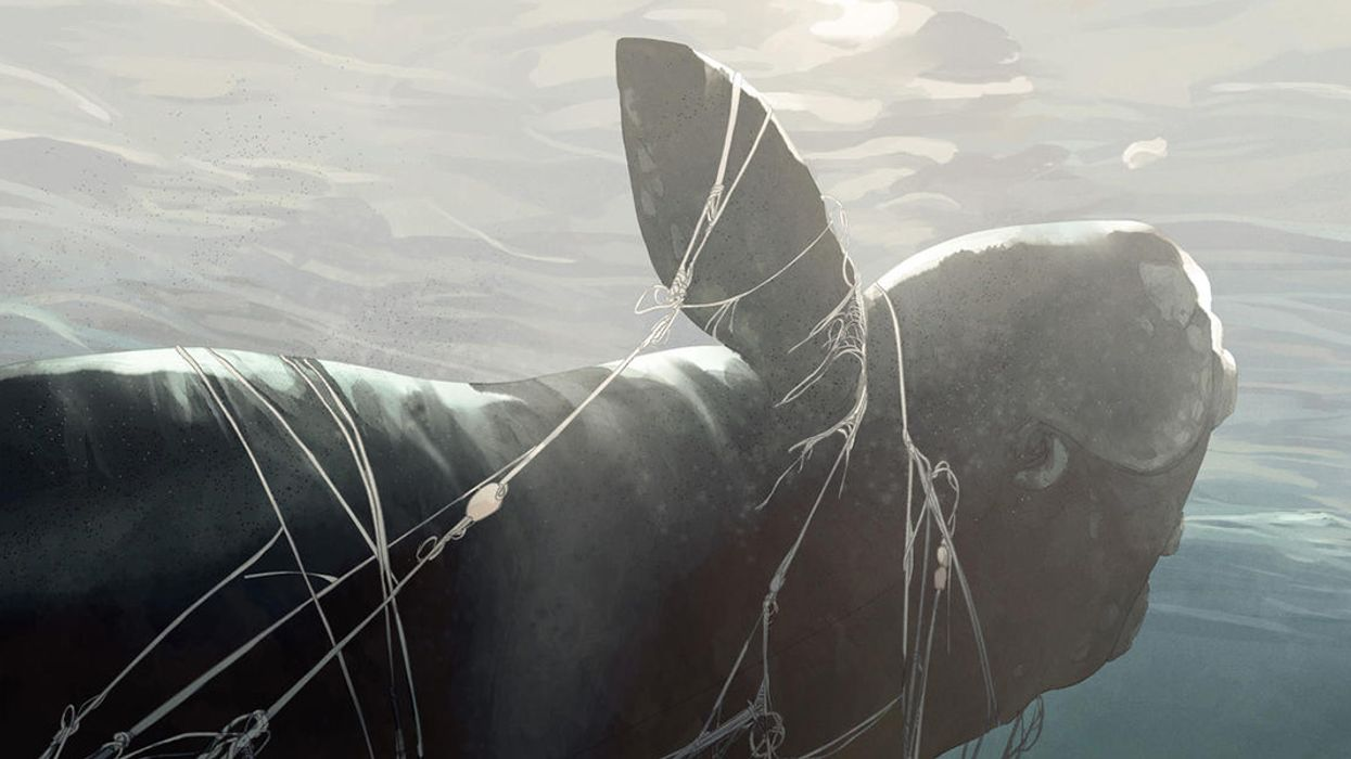 What's Happening to the North Atlantic Right Whale Is Just Plain Wrong