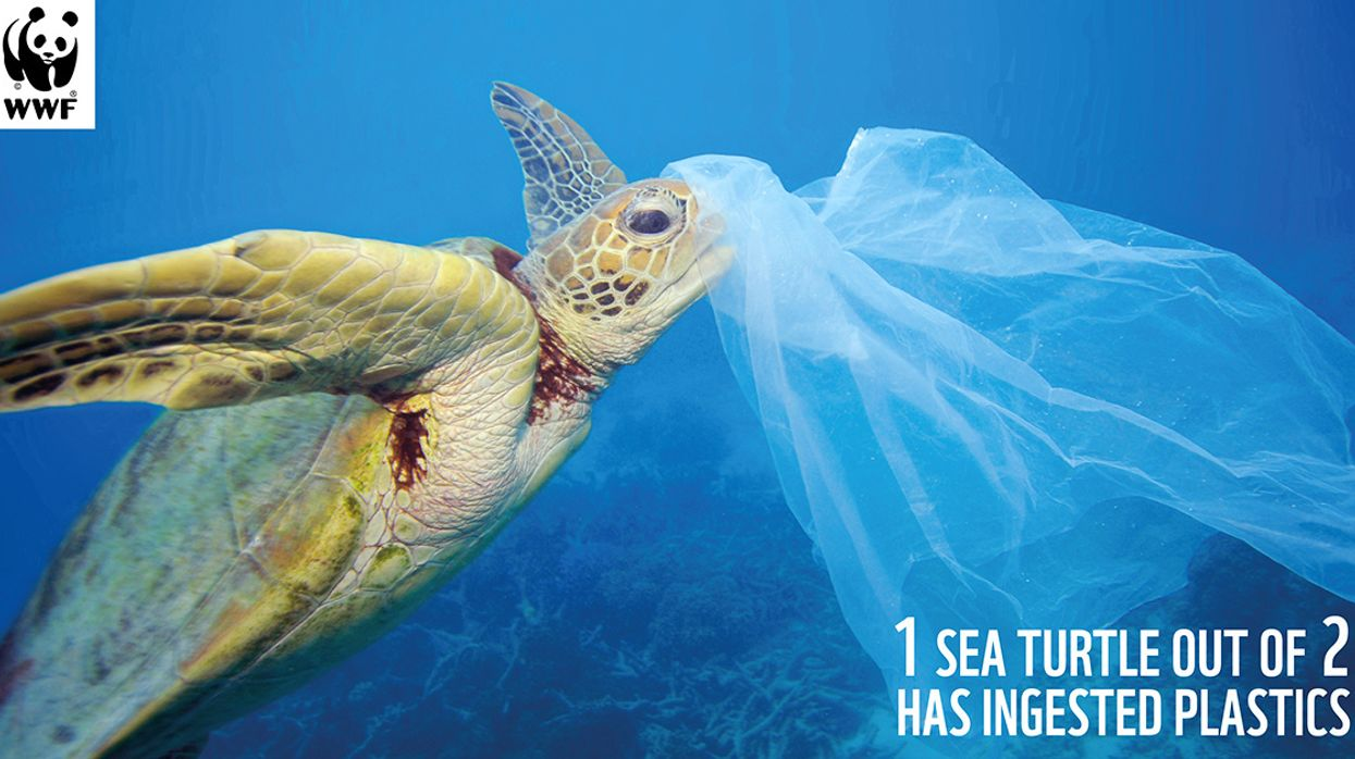 Mediterranean at Risk of Becoming a 'Sea of Plastic,' WWF Warns