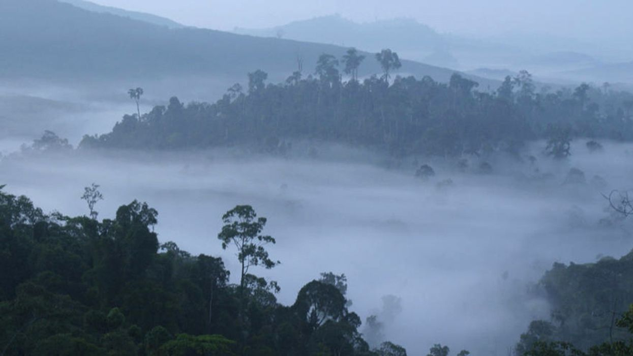 Better Use of Forests, Food and Land Can Deliver 30 Percent of Climate Solutions by 2030