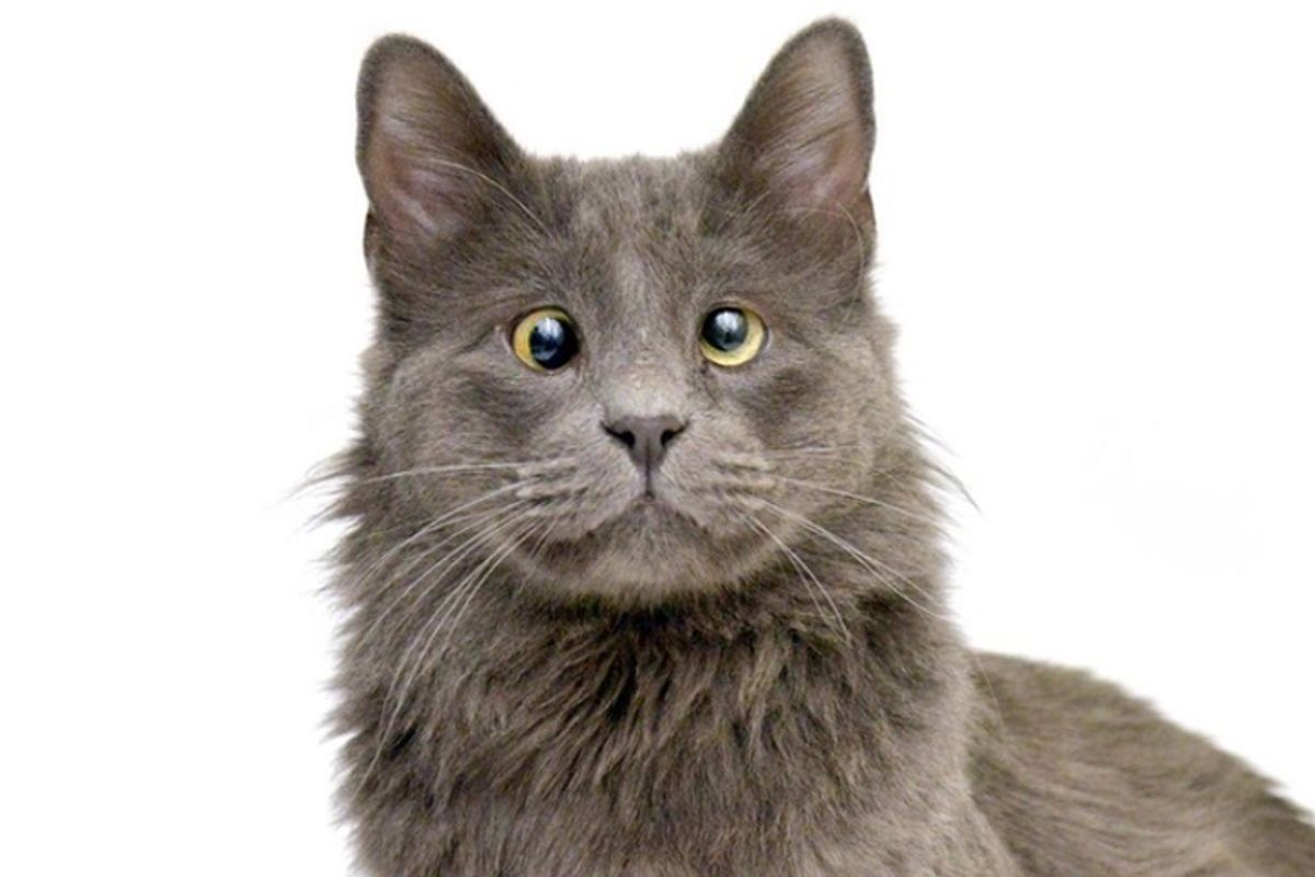 Shelter Cat with Cutest Quirk in His Eyes is Eager to Find a Place to Call His Own
