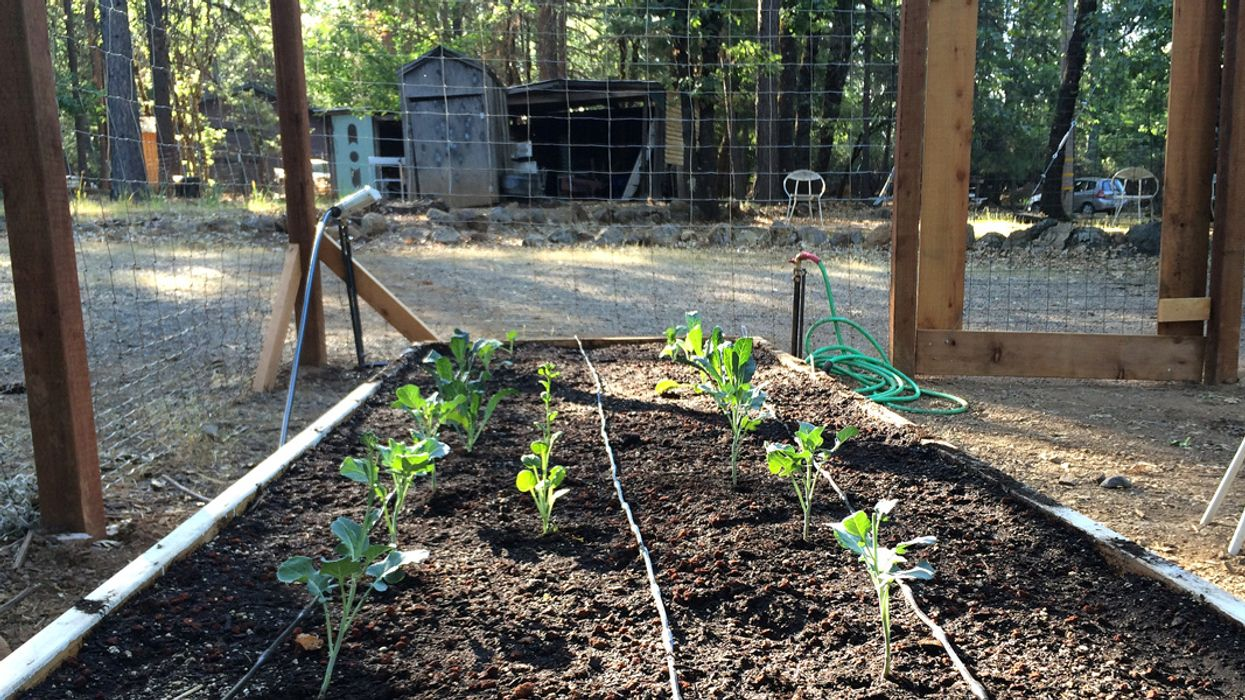 Take Climate Action By Transforming Your Lawn With Edible Landscaping
