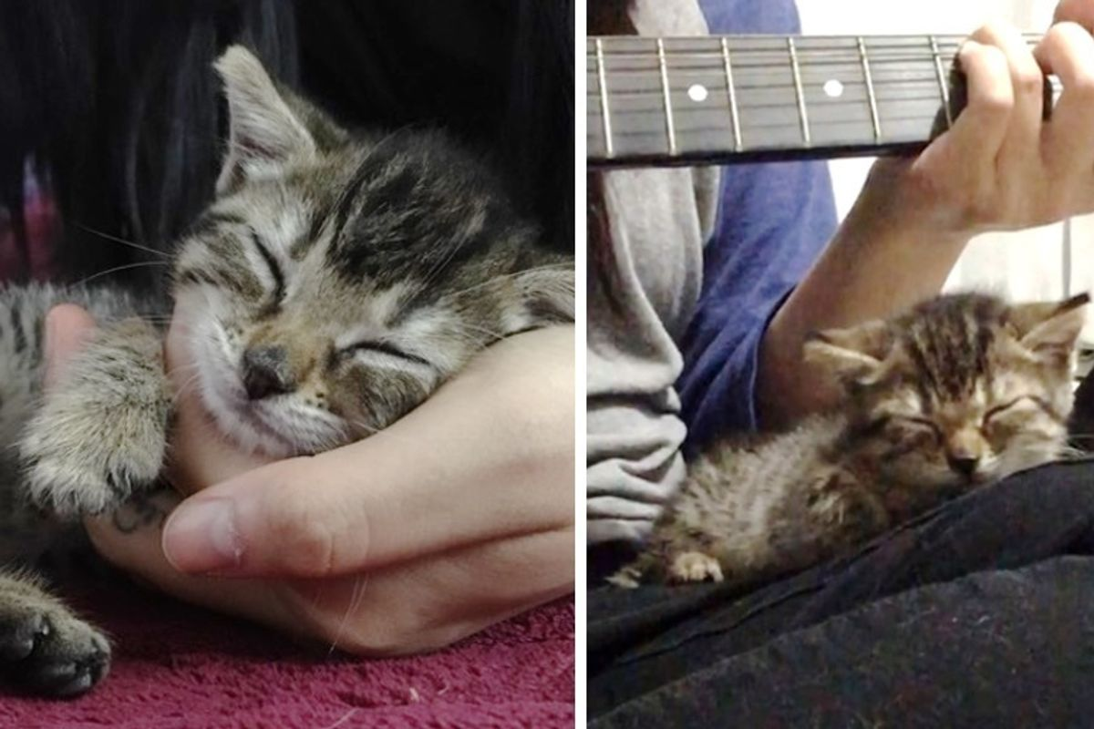 Kitten Rescued as Orphan Finds Comfort When Guitar Plays, and Falls Asleep To It