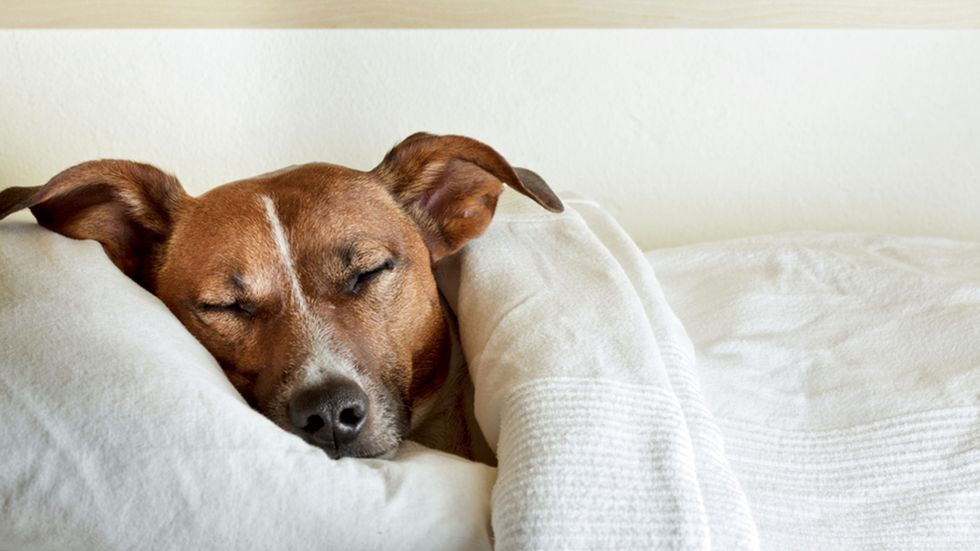 4 Reasons Co-Sleeping with your dog is a good thing.