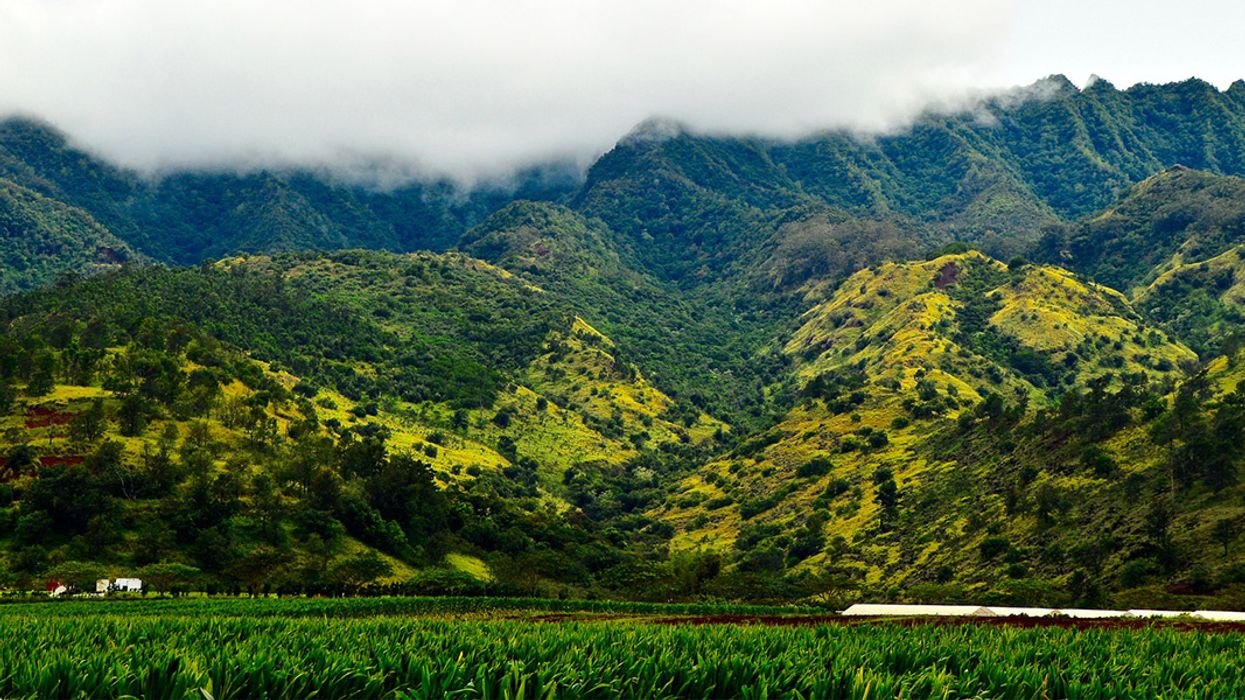 Hawaii Bans Use of Toxic Pesticide Chlorpyrifos