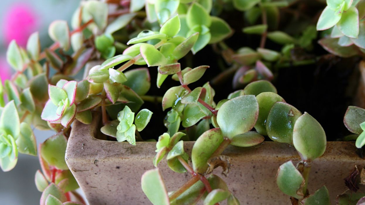 5 Best Indoor Office Plants—and How to Care for Them