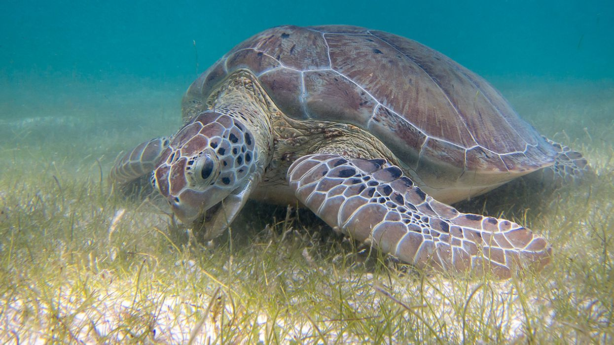 There's Now an App for Mapping Seagrass, the Oceans' Great Carbon Sink