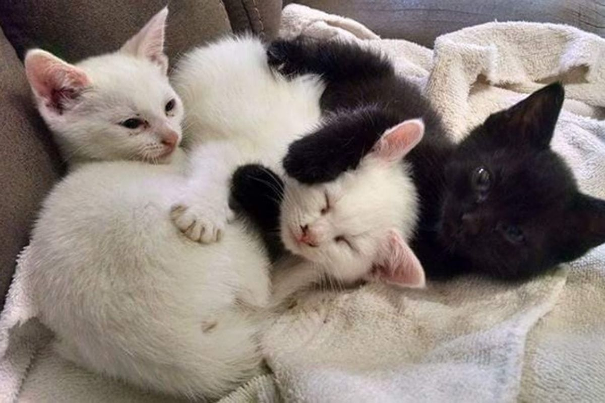 Woman Went to Adopt Two Kittens But Ended Up Rescuing Three
