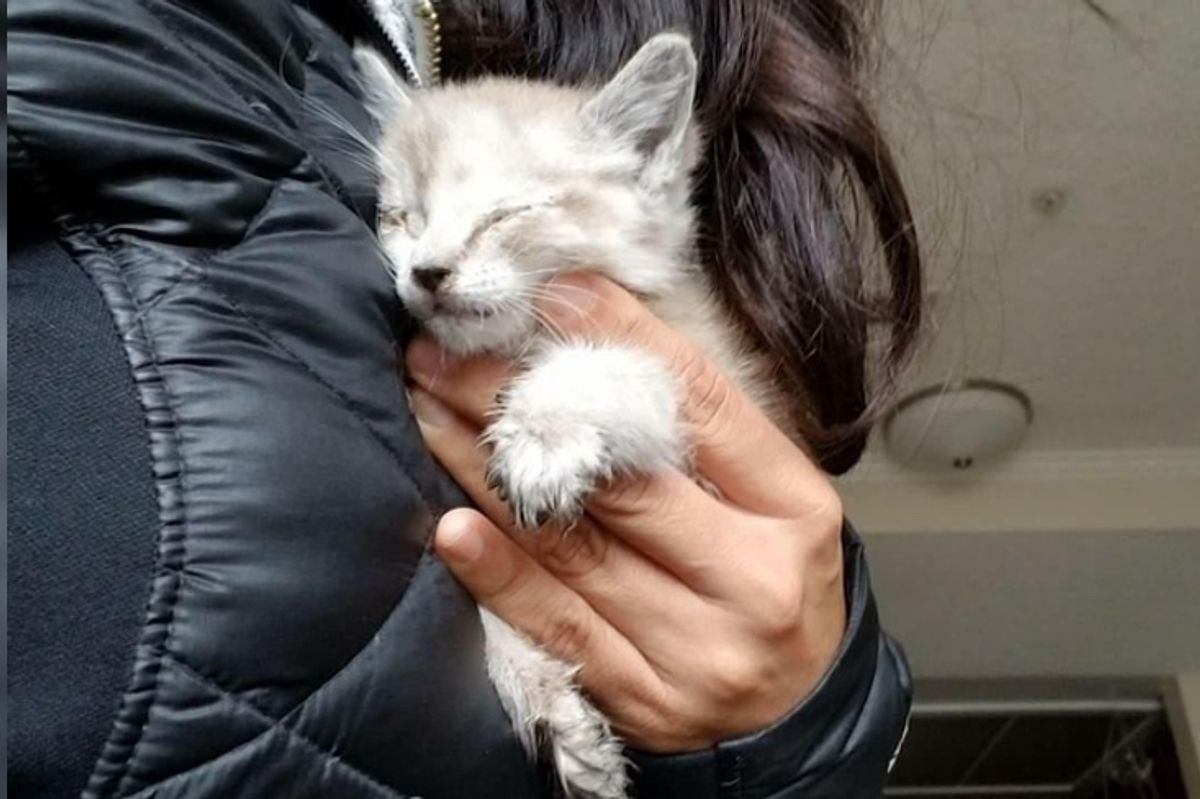 Woman Found Kitten Under Car, Barely Responsive, She Was Determined to Save Her