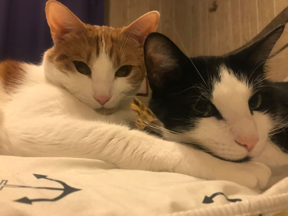 A Letter To My Cats For Their 3rd Birthday