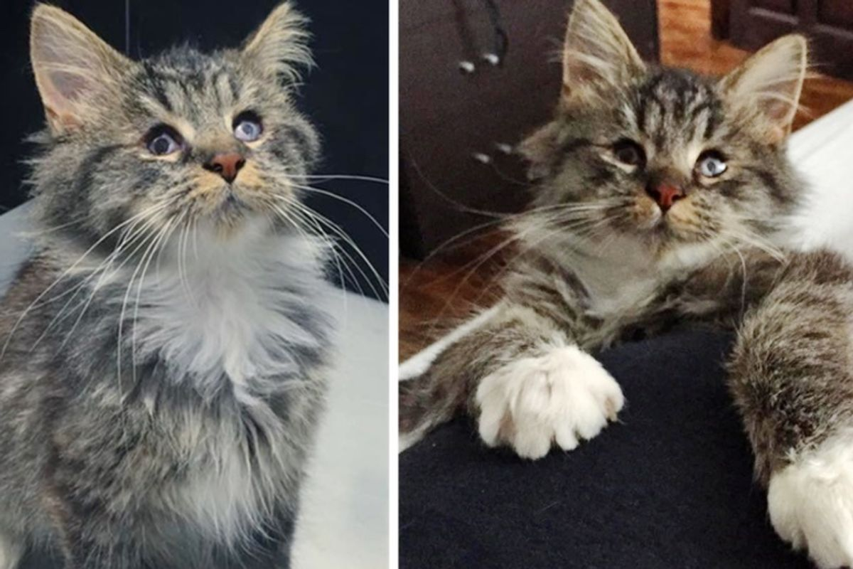 Blind Kitten Found on Streets Gets a New Lease on Life and Gives Everyone Cuddles