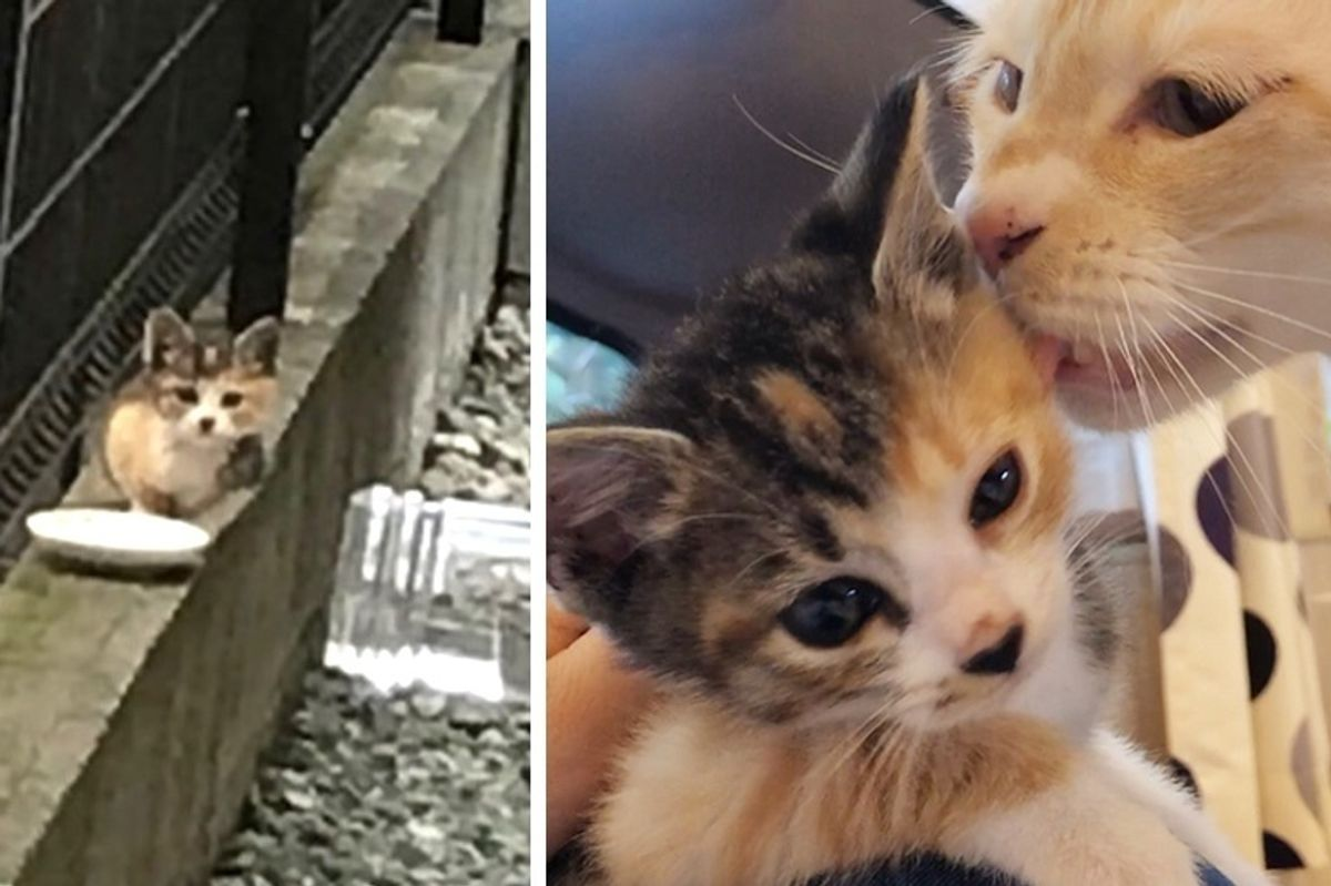 Stray Kitten Found Without a Mom Finds Love in 5 Other Cats at Foster Home