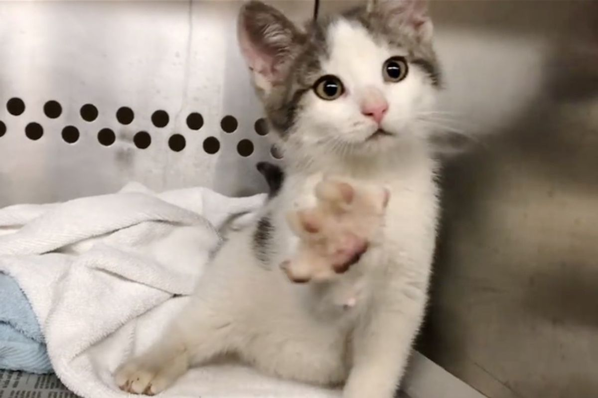 Wobbly Shelter Kitten Uses Cutest Way to Find His Forever Home