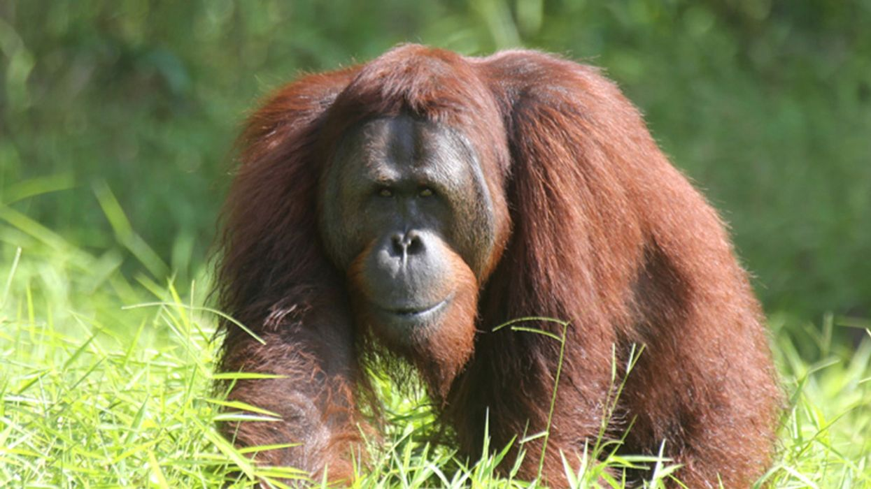 What's Worse Than Palm Oil for the Environment? Other Vegetable Oils, IUCN Study Finds
