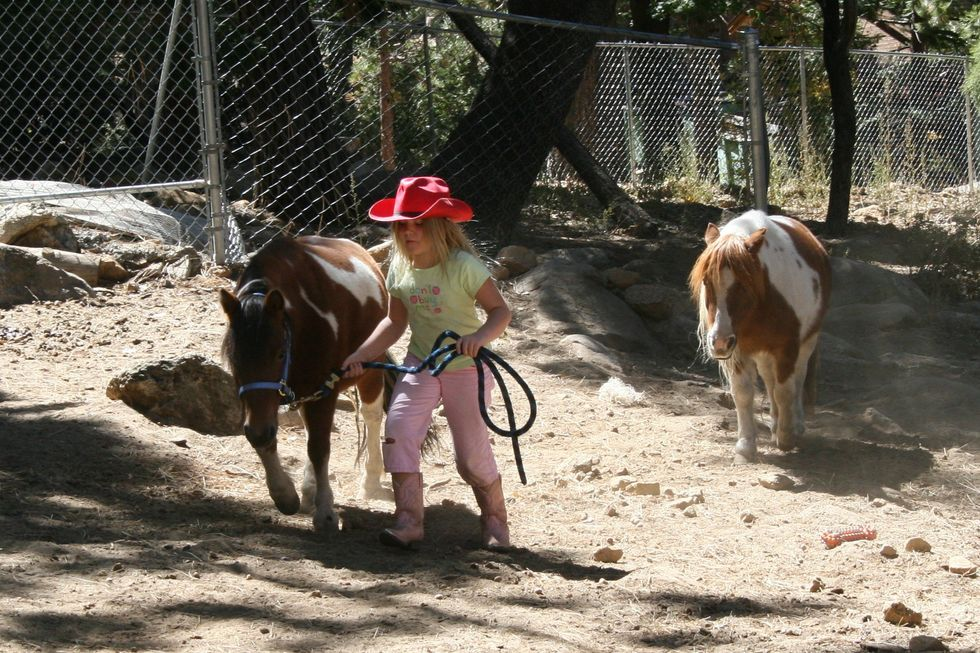 little girl and horses
