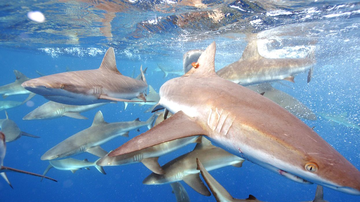 NOAA Proposes Opening Marine Monuments to Fishing Within 90 Days