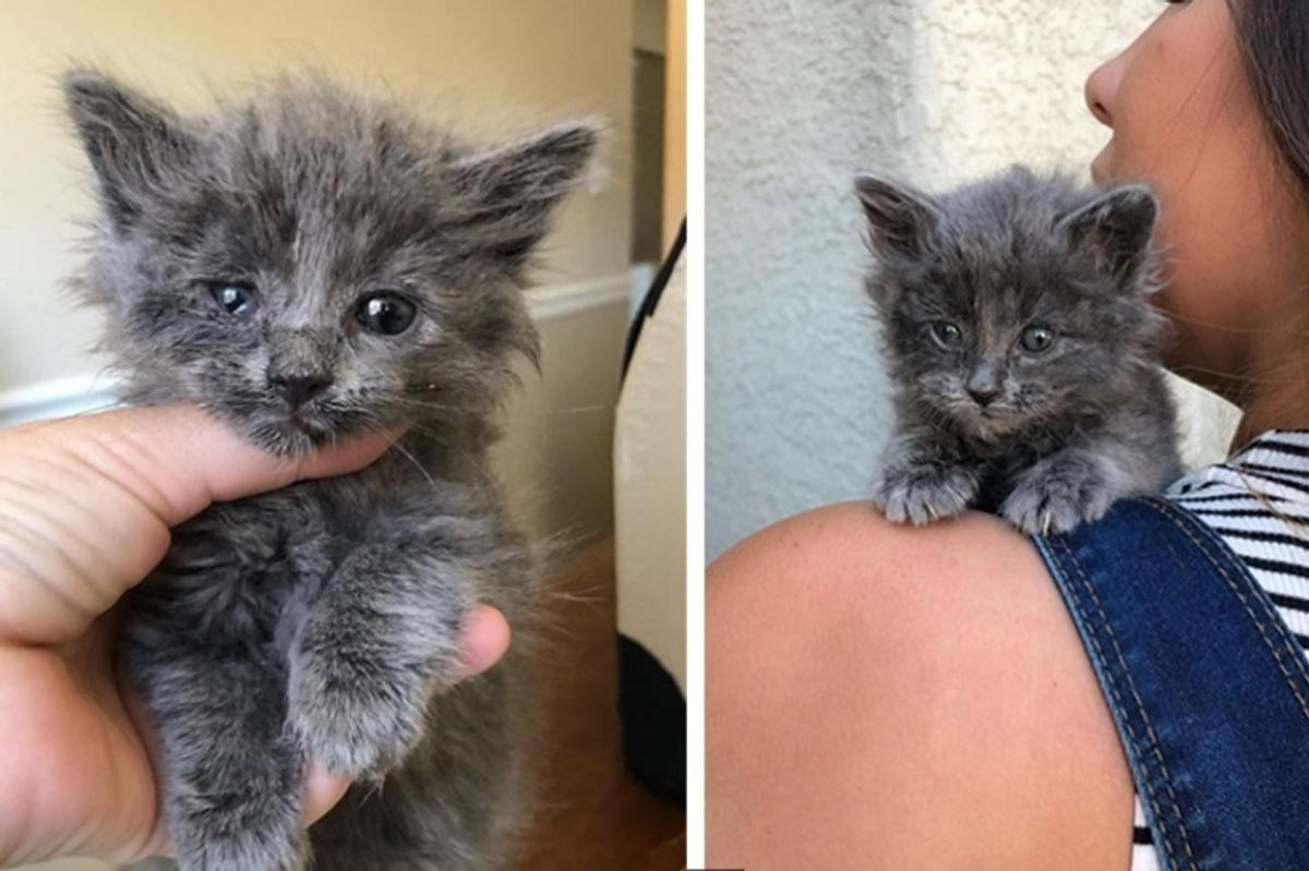Woman Hears Kitten's Cries from Street and Saves Him from Scorching Heat