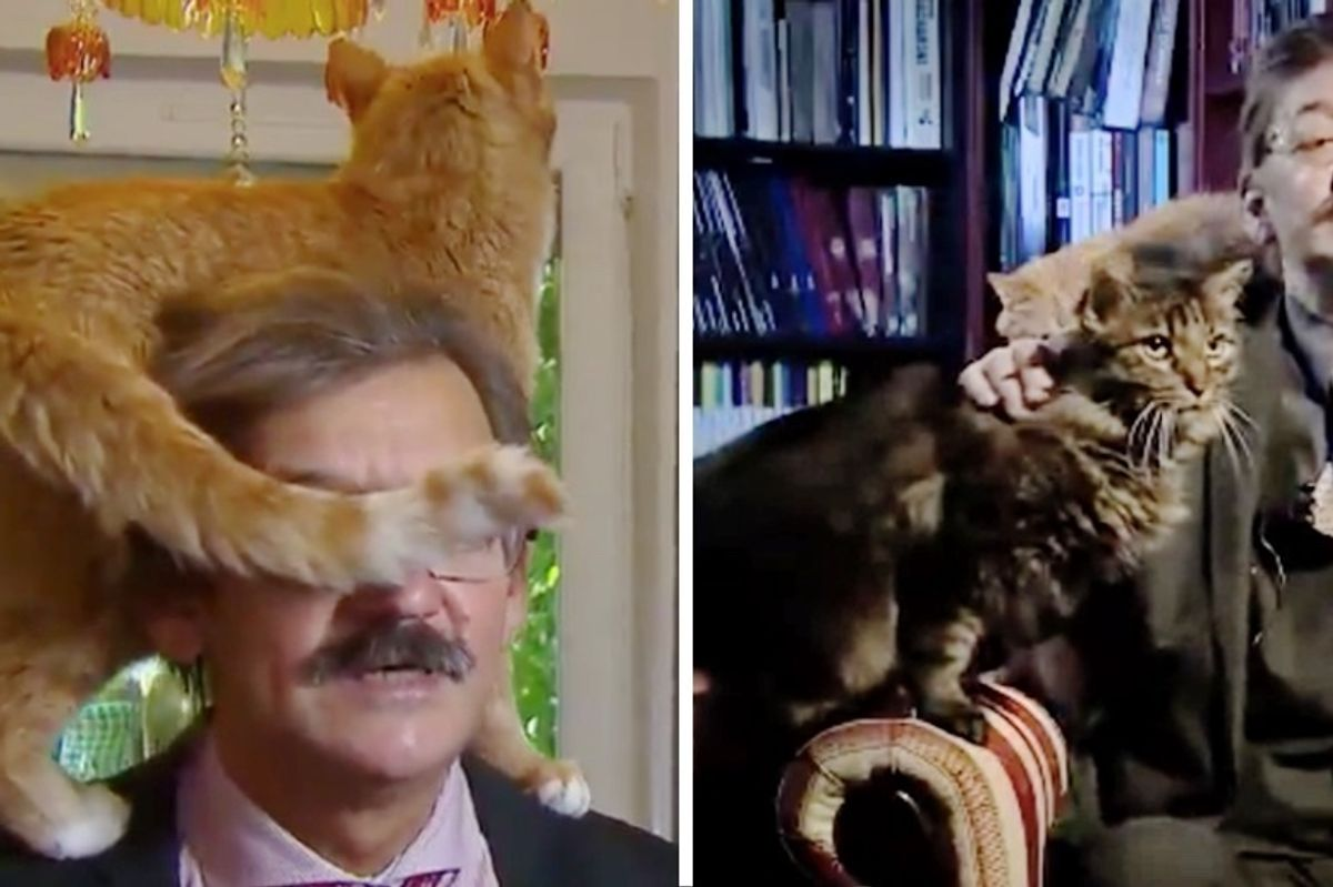 Cat Climbs on Man's Shoulder During Live Interview, But This Isn't the First Time