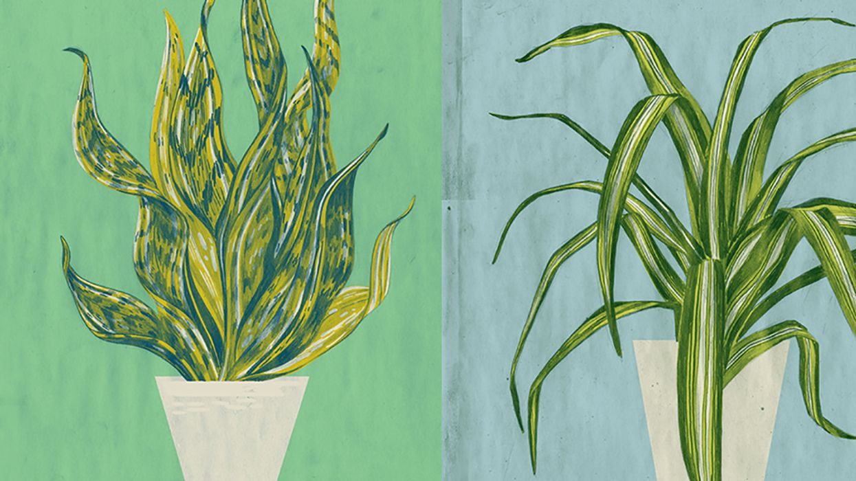 The 5 Best Houseplants to Purify the Air In Your Home