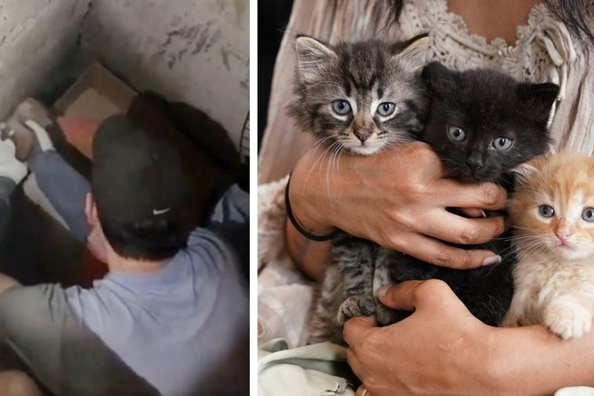 Construction Workers Find Kittens and Keep Them Protected Until They are Rescued