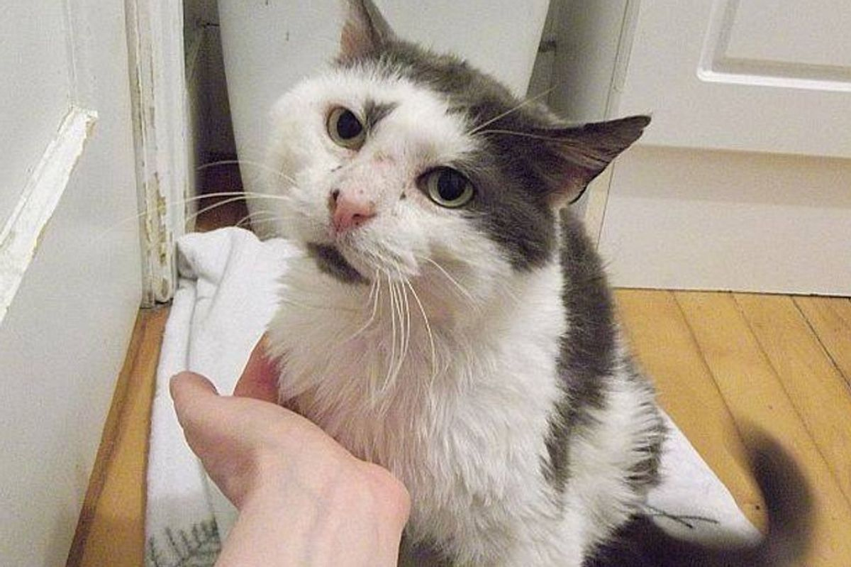 After 11 Years On the Street, Cat Makes Incredible Recovery While Others Didn't Think He Would Survive