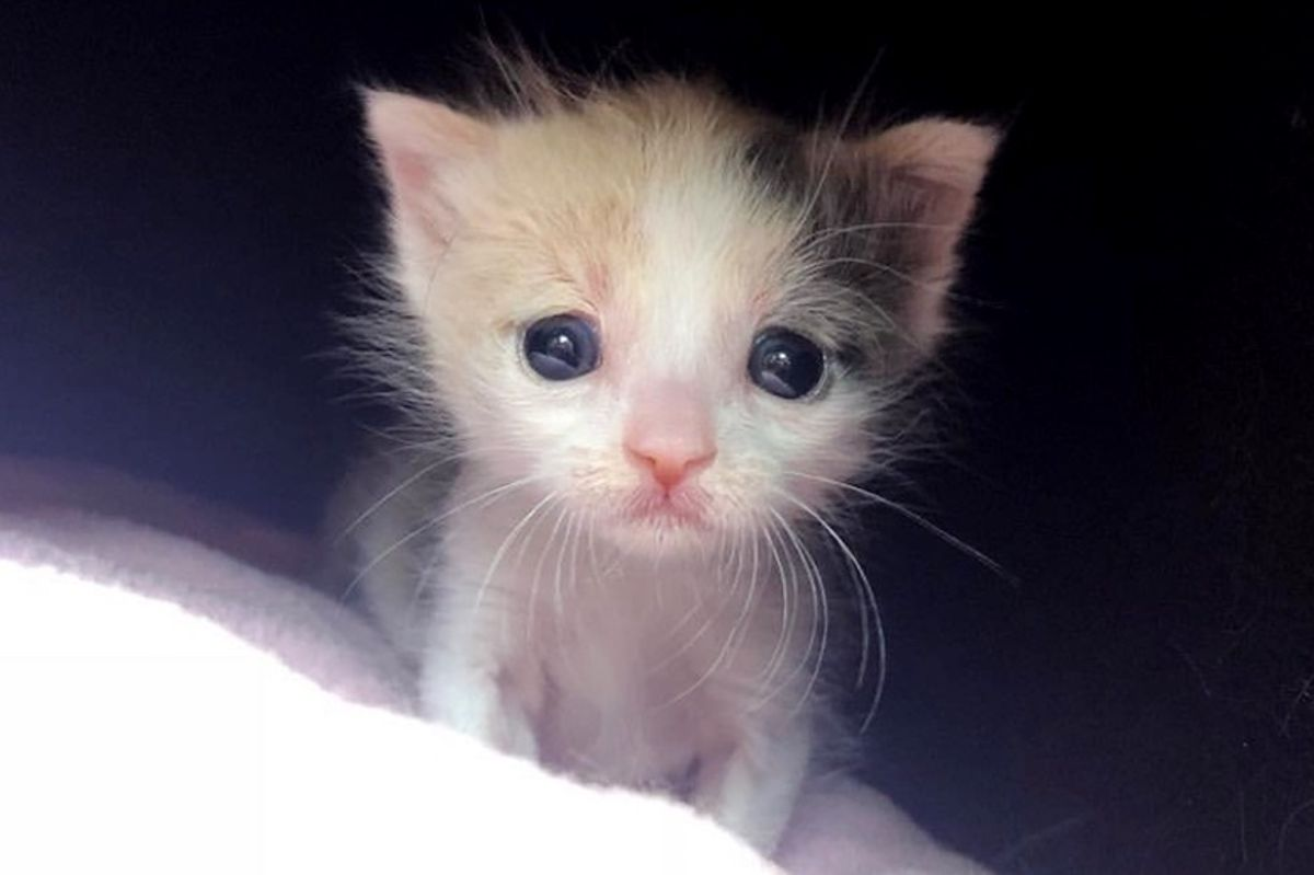 Orphaned Kitten Found Alone on Street Clings to Her Foster Mom When She Takes Her in